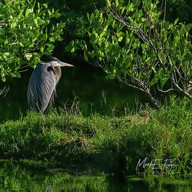 Great Blue Heron On Bank by Mark Fuge