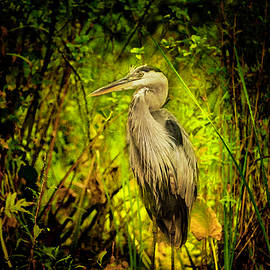 Great Blue Heron Painterly by Rosette Doyle
