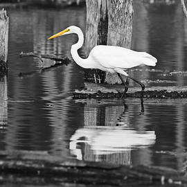 Great Egret Reflections Selective by Marlin and Laura Hum