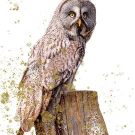 Great Grey Owl Art by Darren Wilkes