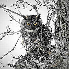 Great Horned Eyes in Selective by Carmen Macuga