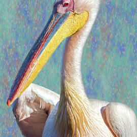 Great White Pelican, Profile, painterly by Belinda Greb
