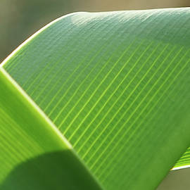 Green Abstract Nature by Kevin Smith