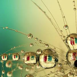 Green and Cream Dandy Balls by Sharon Johnstone