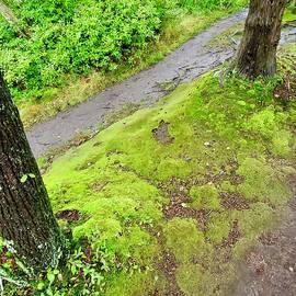 Green Carpet  by Lisa Lindgren