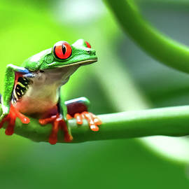 Green Forest Friends by Karen Wiles