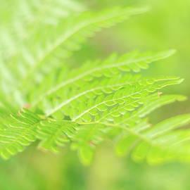 Green Freshness Of Fern by Helen Filatova