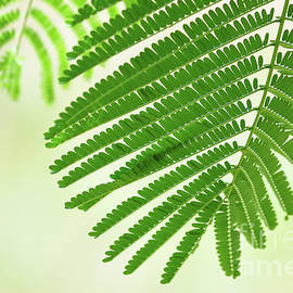 Green Leaf Tracery 5 by Helen Filatova