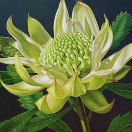 Green Waratah Beauty 1 by Fiona Craig
