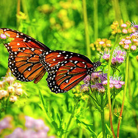 Gregg's Mist-Flower with Monarch Butterflies by Greg Reed