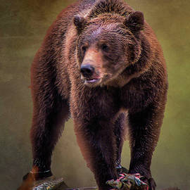 Grizzly on Chilkoot River by Richard Smith