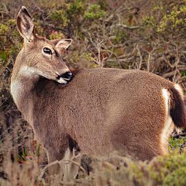 Grooming Deer by Brian Tada