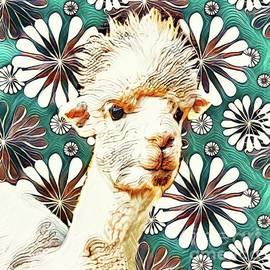 Groovy Alpaca by Tina LeCour