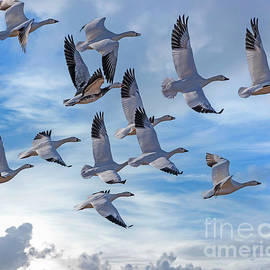 Group Flight by Dale Erickson