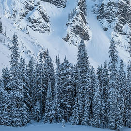 Group of Pine Trees at the Base of a Mountain, Kananaskis, Alberta, Canada by Yves Gagnon