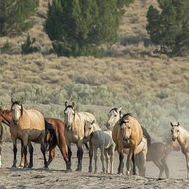 Group Portrait - Palomino Butte Herd by Belinda Greb
