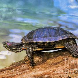 Grumpy Turtle  by Elaine Manley