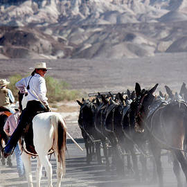 Guiding the Mules In Death Valley by Ivete Basso Photography
