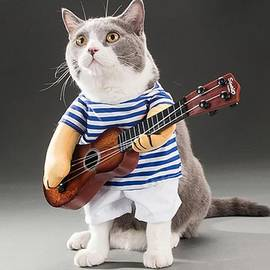 Guitarist Cat by Clever Combative