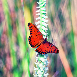 Gulf Fritillary and Fragrant Lady's Tresses by Felipe Correa