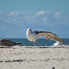 Gull Yoga by Steven Nelson