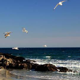 Gulls by Lennie Malvone