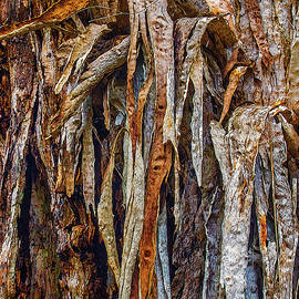 Gum Bark by Bette Devine