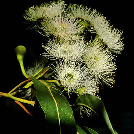 Gum Blossom by Bette Devine