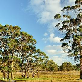 Gumtrees on Farmland by Hugh Warren
