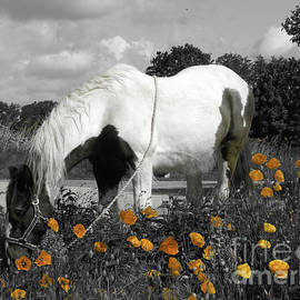 Gypsy Horse and Poppies SC by Elisabeth Lucas