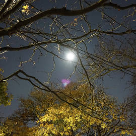 Hallowe'en Blue Moon by Maria Faria Rodrigues