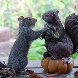 Hand Over a Nut Please by Trina Ansel