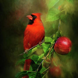 Handsome Cardinal by Kathy Kelly