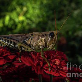 Handsome Grasshopper by Linda Howes