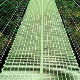 Hanging Bridge by Paula Goodman