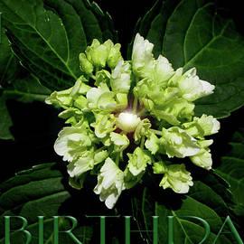 Happy Birthday by Gardening Perfection