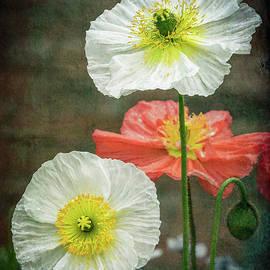 Happy Poppies by Elvira Peretsman