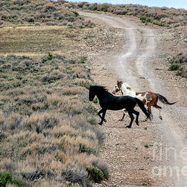 Happy Trails to You by Jim Garrison