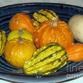 Harvest Bounty - Colourful Gourds by Kathryn Jones