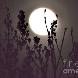 Harvest Moon Risin' by Debra Banks
