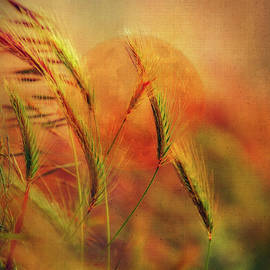 Harvest Moon by Terry Davis