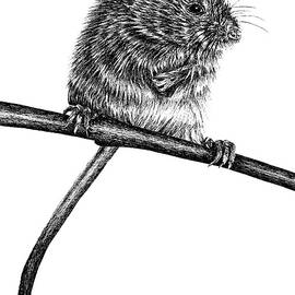 Harvest mouse by Loren Dowding