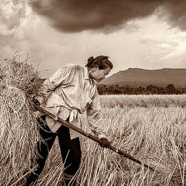 Harvesting in Rural Thailand by Lee Craker