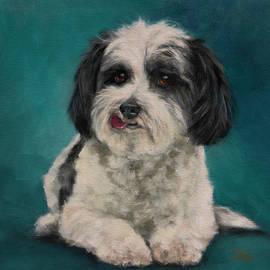 Havanese Dog by Julie Dalton Gourgues