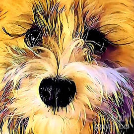 Havanese Puppy Love by Diann Fisher