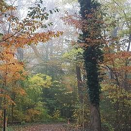Haverford College Trail by Fang Norwood