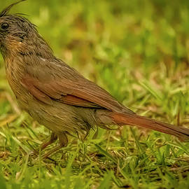 Having a Bad Feather Day in the Pouring Rain by TJ Baccari