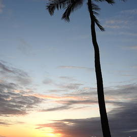 Hawaii Palm Sunset  by Tina M Powell