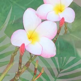 Hawaiian Pink Plumeria by Diann Fisher
