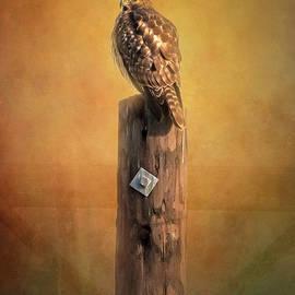 Hawk by Joan Carroll